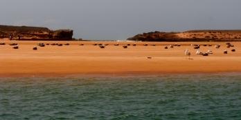 Oulidia beach